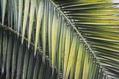 Fogli della palma fotografie stock