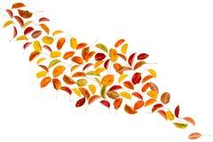 Fogli della pera di autunno Immagini Stock Libere da Diritti