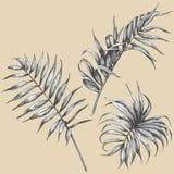Fogli della pianta tropicale Fotografia Stock
