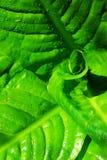 Fogli della pianta verde Immagine Stock