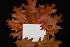 Fogli della quercia con la scheda Fotografia Stock
