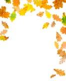 Fogli della quercia di autunno Fotografia Stock Libera da Diritti