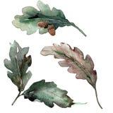 Fogli della quercia Fogliame floreale del giardino botanico della pianta della foglia Fotografia Stock Libera da Diritti