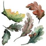 Fogli della quercia Fogliame floreale del giardino botanico della pianta della foglia Immagine Stock