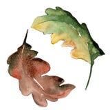 Fogli della quercia Fogliame floreale del giardino botanico della pianta della foglia Fotografia Stock