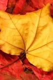 Fogli di autunno 01 Fotografia Stock Libera da Diritti