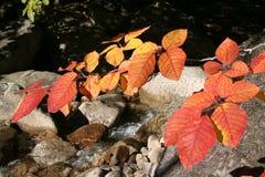 Fogli di autunno 2 Fotografia Stock
