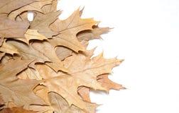 Fogli di autunno. fotografia stock libera da diritti