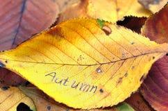 Fogli di autunno. Immagini Stock Libere da Diritti