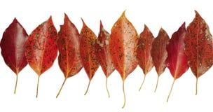 Fogli di autunno Immagine Stock