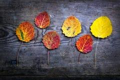 Fogli di autunno fotografie stock libere da diritti
