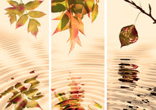 Fogli di autunno Immagini Stock