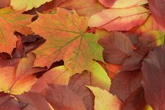 Fogli di autunno 7 Fotografia Stock Libera da Diritti