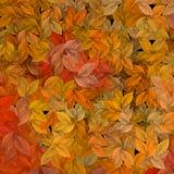 Fogli di autunno Fotografia Stock Libera da Diritti