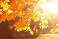 Fogli di autunno al tramonto Immagine Stock
