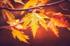 Fogli di autunno asciutti fotografie stock libere da diritti