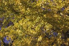Fogli di autunno asciutti Fotografie Stock