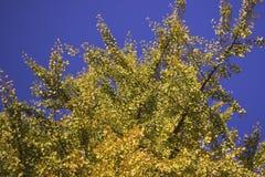 Fogli di autunno asciutti Fotografia Stock Libera da Diritti