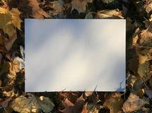 Fogli di autunno bianchi dello spazio Fotografie Stock Libere da Diritti