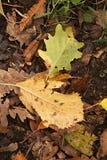 Fogli di autunno caduti Immagine Stock