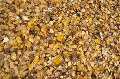 Fogli di autunno caduti Fotografia Stock