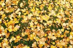 Fogli di autunno caduti Fotografia Stock Libera da Diritti