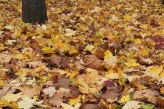 Fogli di autunno caduti nella sosta Immagini Stock Libere da Diritti
