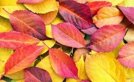 Fogli di autunno caduti Priorità bassa di autunno fotografie stock libere da diritti