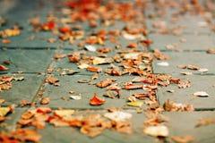 Fogli di autunno caduti sulla terra Immagine Stock