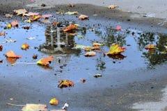Fogli di autunno caduti sulla terra Pozza dell'acqua blu Fotografia Stock Libera da Diritti