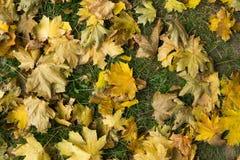 Fogli di autunno caduti Vista superiore colore giallo Fotografia Stock