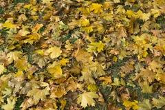 Fogli di autunno caduti Vista superiore colore giallo Immagini Stock Libere da Diritti