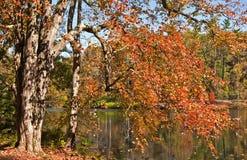 Fogli di autunno che appendono a mala pena sopra Fotografia Stock Libera da Diritti