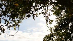 Fogli di autunno che cadono nel vento stock footage