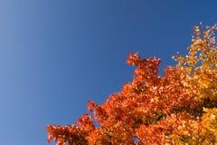 Fogli di autunno chiari Fotografie Stock
