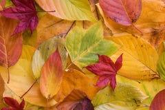 Fogli di autunno Colourful Fotografia Stock