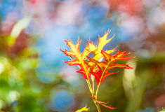 Fogli di autunno Colourful Immagini Stock