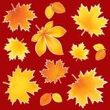 Fogli di autunno dell'accumulazione Immagini Stock Libere da Diritti