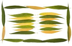 Fogli di autunno dell'accumulazione del salice piangente Immagine Stock Libera da Diritti