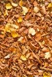 Fogli di autunno della priorità bassa Fotografie Stock Libere da Diritti