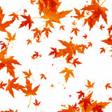 Fogli di autunno di caduta su priorità bassa bianca Immagine Stock