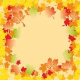 Fogli di autunno di Mapple Fotografia Stock