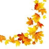 Fogli di autunno di volo Fotografia Stock Libera da Diritti