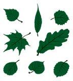 Fogli di autunno disegnati a mano Fotografia Stock