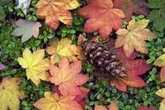 Fogli di autunno e un cono del pino fotografie stock libere da diritti