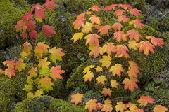 Fogli di autunno e un cono del pino fotografie stock