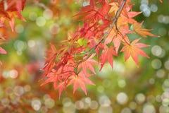 Fogli di autunno, fuoco molto poco profondo Fotografia Stock Libera da Diritti