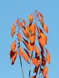 Fogli di autunno gialli immagini stock
