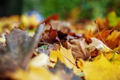 Fogli di autunno gialli Fondo Posto per testo Il concetto è Immagine Stock