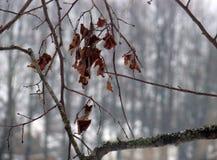 Fogli di autunno glassati Immagini Stock Libere da Diritti